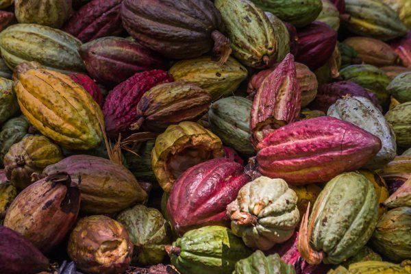 Cocoa pods from Ambanja, Madagascar